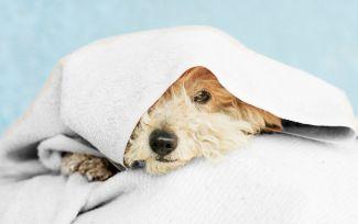 Cuidados invernales de las mascotas