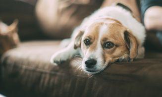 ¿Qué hacer para lograr que mi perro recupere su energía?