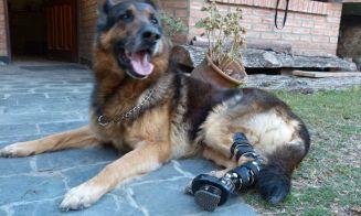 [Fotos] Un argentino ayuda a que los perros puedan volver a caminar
