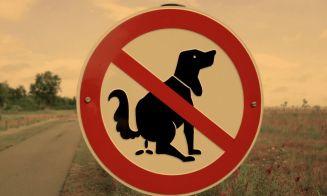 Perros españoles se harán prueba de sangre para reconocer sus desechos