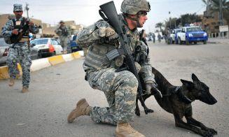 Perros Veteranos del Ejército de Estados Unidos, serán puestos en adopción.