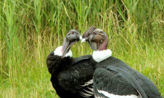 Pájaros más grandes del mundo