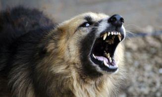 Los perros comunican algo cuando ladran