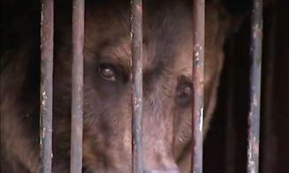 Animales de zoológicos rusos mueren ahogados en inundaciones