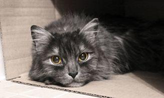 La policía de Canadá investiga la muerte de 14 gatos