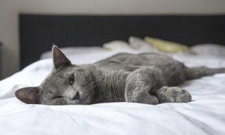 Consejos de seguridad para gatos domésticos