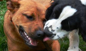 Cómo lograr que tu perro acepte al nuevo cachorro