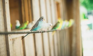 Cómo cuidar (y mantener) a tus pájaros