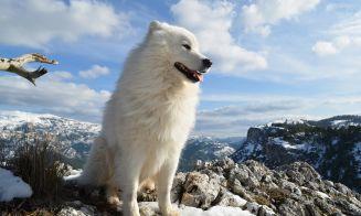 7 videos motivacionales para tener perros