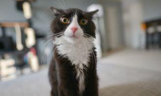 5 videos de gatos locos