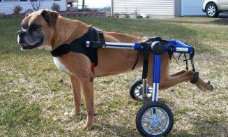 5 videos de perros discapacitados que te harán amar la vida