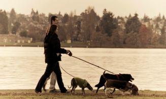 5 beneficiosas razones por las que debes salir y jugar con tu perro