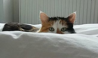 Gatos que creen que están muy bien escondidos
