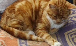 Historias de mascotas: Tuve que botar una pared para rescatar a mi gatita curiosa
