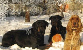 Mis dos perras con la misma enfermedad