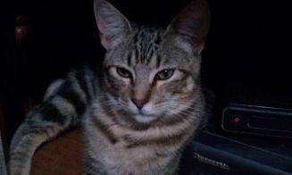 Historias de mascotas: Pumita, el gatito que sufrió un triste destino