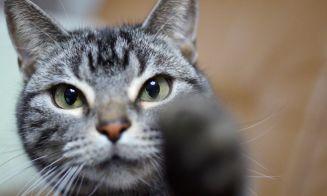 8 beneficios de tener un gato en casa