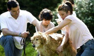 7 razas de perros que no son para departamentos