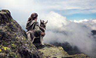 7 razas de perros que parecen lobos