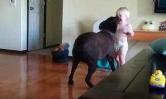 Bebé muere de la risa jugando con su perro