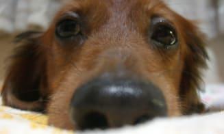 Historias de mascotas: el triste rescate de un perrito de la calle