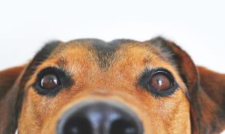 8 beneficios de tener un perro en casa