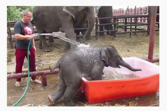 [Video] Bebé Elefante disfrutando de su baño