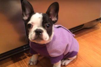 3 Cachorritos con Hipo (videos)