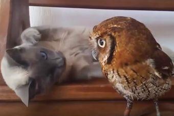 Primer encuentro de gatitos con animales de otra especie (video)