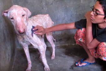 Conmovedor rescate y transformación de perrito abandonado