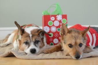 Esta navidad no compres, adopta