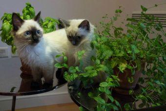 5 hierbas y plantas que pueden beneficiar a tu mascota