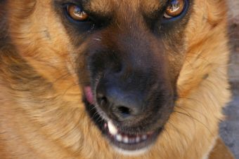 ¿Las Mascotas necesitan psicólogos?