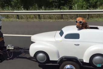 [Video] Un perro viaja con más estilo que su dueño