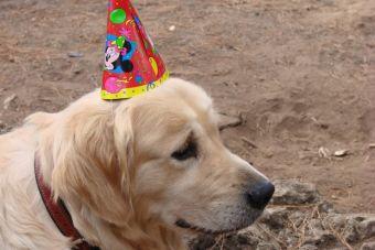 Los perros celebrarán las Fiestas Patrias y estás invitado