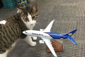 Aerolínea canadiense salvó a mascotas de zona afectada por incendio