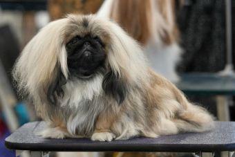 Gobierno regional chino pretende exterminar a todos los perros