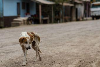 ¿Cómo podemos ayudar a los animalitos callejeros?