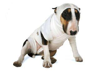 Pet Frist Aid, la primera aplicación para actuar ante un accidente de tu mascota