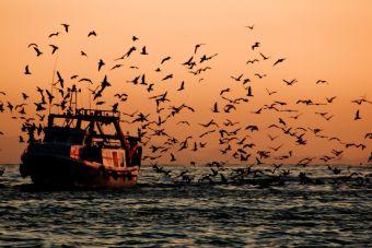 Las aves marinas son capaces de guiarse gracias al olfato