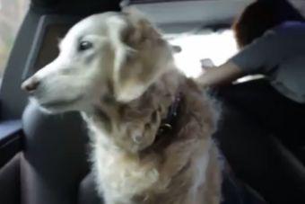 [Video] Perrita rescatista del 11 de septiembre del 2001 volvió al lugar de los hechos