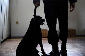 Perro de la PDI fue sancionado por error mientras buscaba droga en un bus