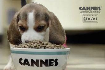 ¿Existen alimentos para perros con certificación alimentaria en Chile?