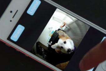 Ahora tu perro te podrá enviar una selfi cuando esté solo