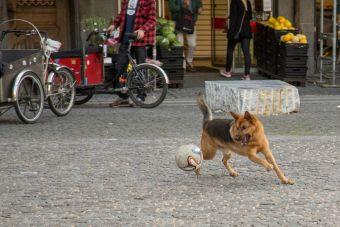 En Puerto Montt proponen encerrar a perros abandonados durante el Mundial de Fútbol Sub 17