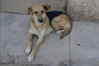 En España quieren hacer compost de los perros callejeros