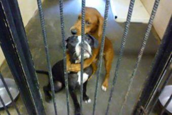 Una pareja de perros se salvó de la muerte gracias a una foto