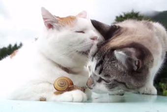 [Video] Estos gatos son muy amigos de este caracol