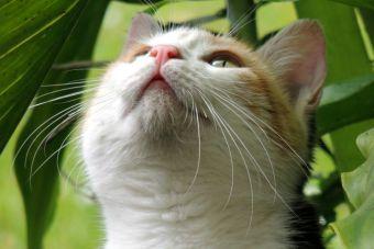Los gatos solo le maúllan a los humanos