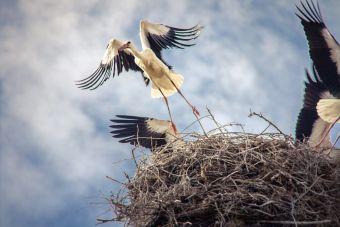 Los nidos : El hogar y abrigo de las aves
